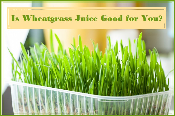 Is Wheatgrass Juice Good for You?